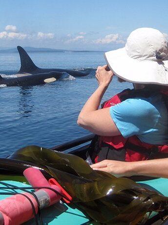 Orcas on San Juan Island