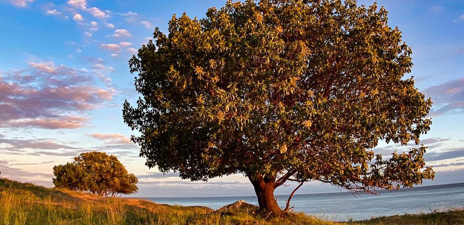 Tree on San Juan Island